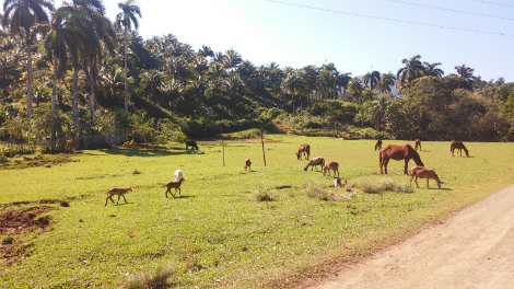 the-untold-truths-about-cuba-wild-nature