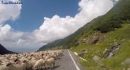 Beautiful Roads - Transfagarasan, Romania, Best Driving Road in the World-inside-post-5